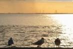 Wilhelmshaven: Möwen am Wangeroogkai bei Sonnenuntergang