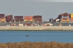Wilhelmshaven: Containerschiff MSC Flaminia hat den JadeWeserPort erreicht