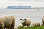 JadeWeserPort: Das Containerschiff Estelle Maersk in Wilhelmshaven
