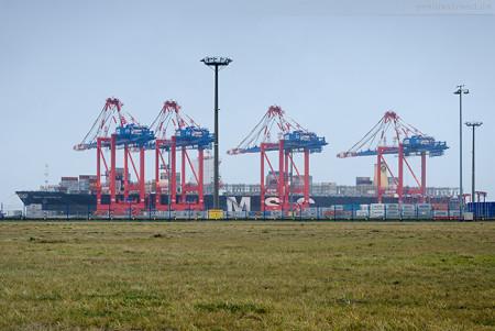 Jade Weser Port Schiffsankunft: Containerschiff MSC DANIELA (Typschiff)