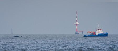 Wilhelmshaven: Die Pottwale von der Insel Wangerooge sind am JadeWeserPort angekommen