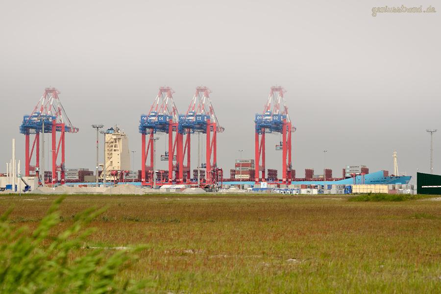 Container Terminal Wilhelmshaven (CTW): Containerschiff MAERSK LANCO (L 299 m)