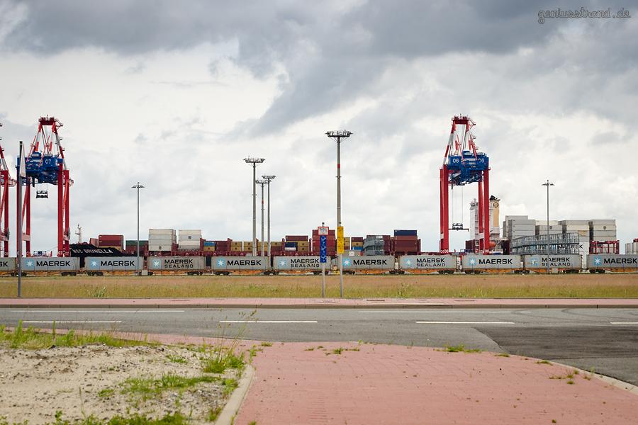 Containerterminal Wilhelmshaven: Containerschiff MSC BRUNELLA (L 299 m) an der Kaje