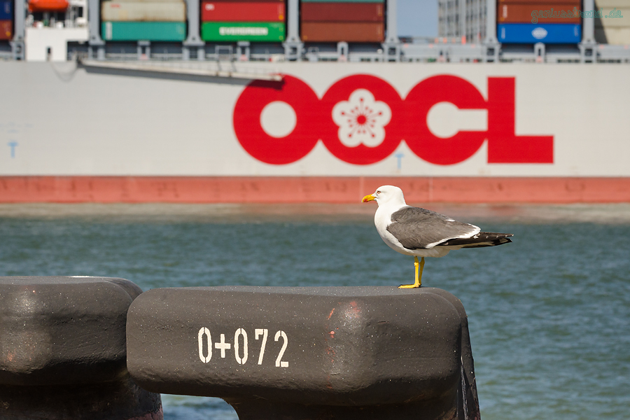 Größtes Containerschiff der Welt: OOCL HONG KONG (L 400 m) am Container Terminal Wilhelmshaven (CTW)