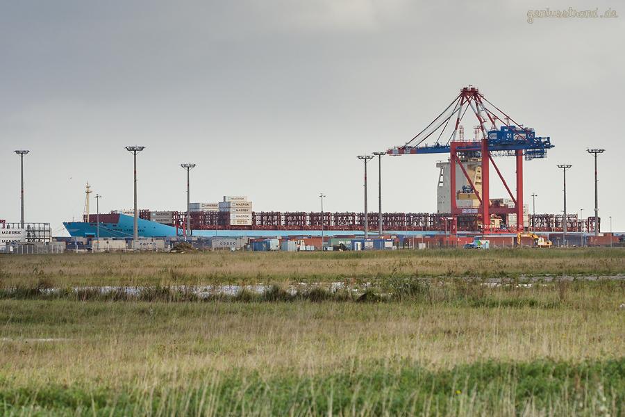 WILHELMSHAVEN: Containerschiff MAERSK LABERINTO (L 300 m) am JadeWeserPort