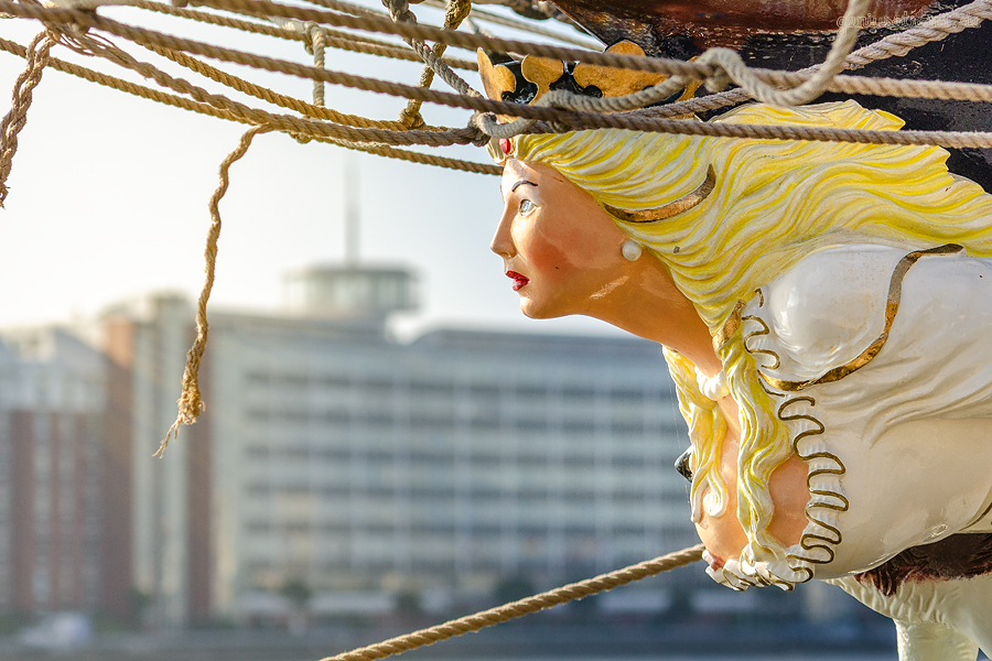 WILHELMSHAVEN JAHRESRÜCKBLICK: September - Busenblitzer beim Sailing-Cup am Bontekai